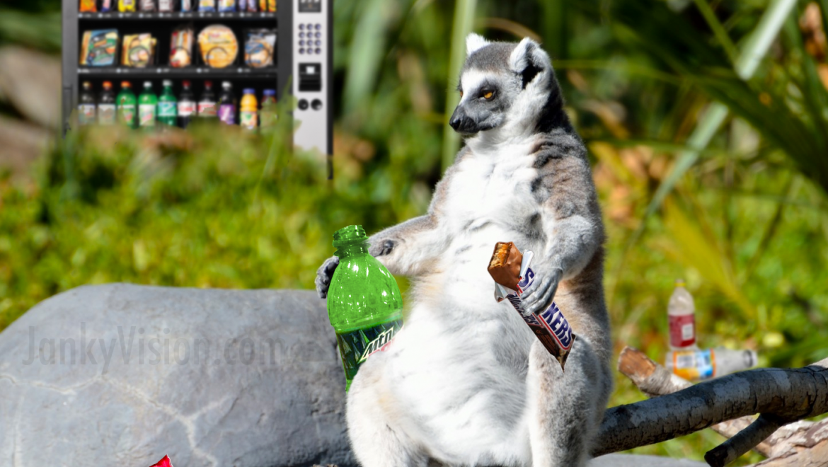 Obesity epidemic in zoo linked to vending machines in enclosures