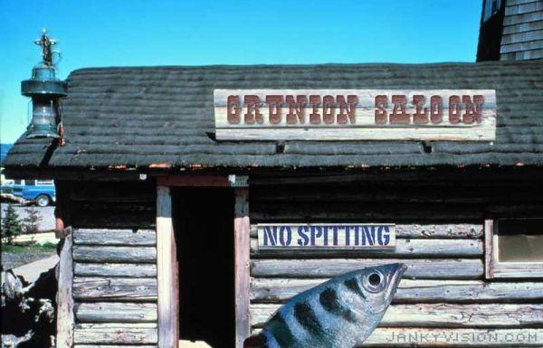 Archerfish kicked out of saloon