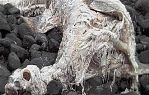What is this bizarre mystery creature that washe– oh, it's a decomposed sturgeon