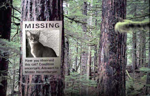 Tree may have fallen on Schrödinger's cat