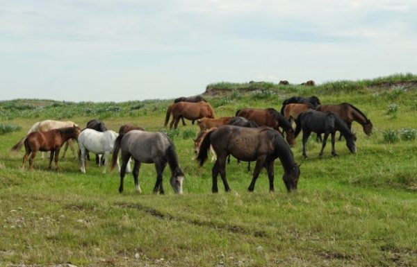 Horses cooperate to find lost contact lens