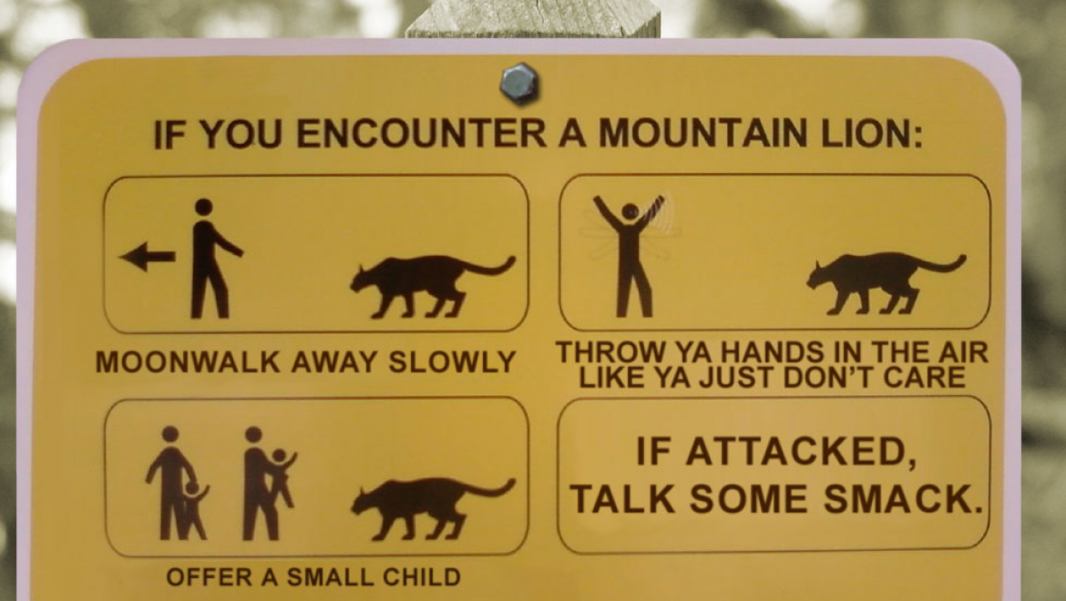 4 Easy Steps for Confronting a Mountain Lion