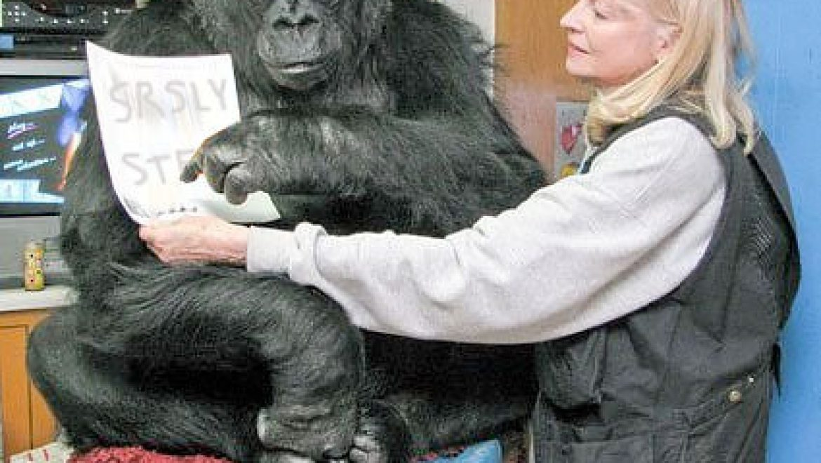 Ape learns sign language, asks researchers to shut up