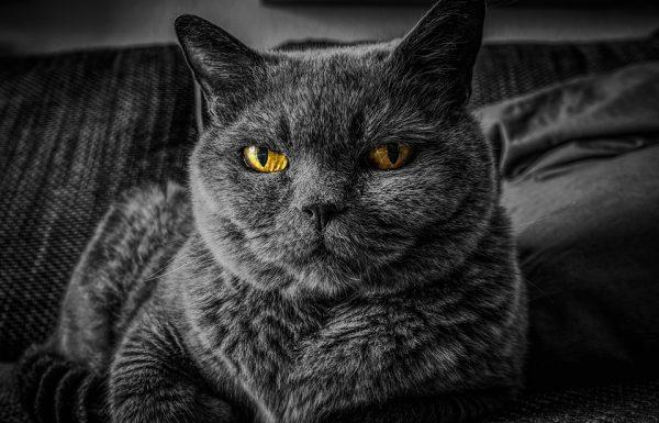 Family Cat Establishes New Waking Hours