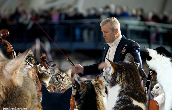 Cat Orchestra Thrown Into Chaos By Conductor With Laser Baton