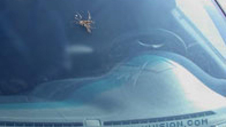 Mosquito journalist embedded in windshield