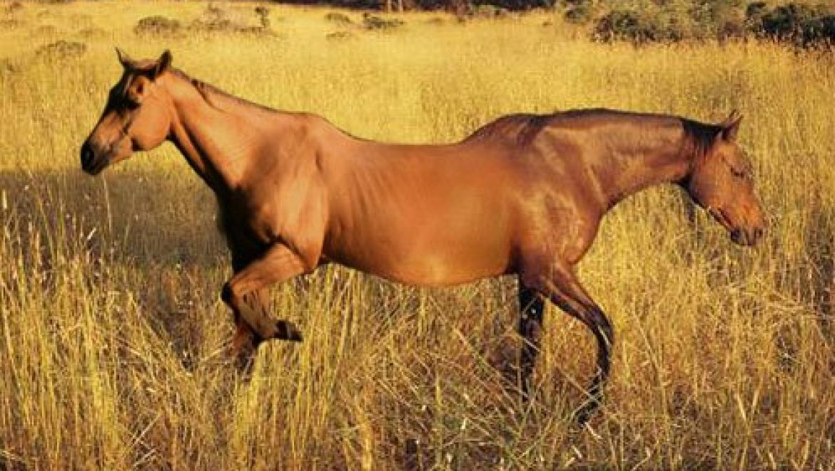Two-headed horse suffers fatal constipation