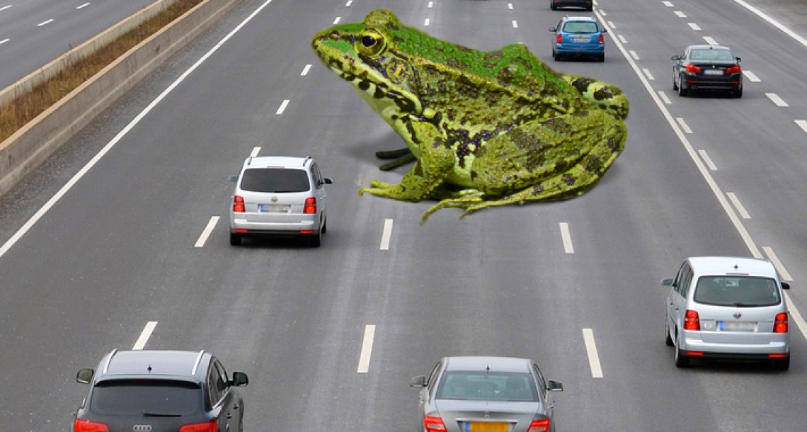 Commuters Stunned By Real Life Game Of Frogger