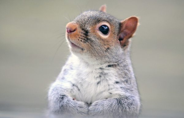 Squirrel Wants To Know If You're Going To Eat That